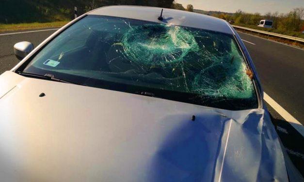 Szarvasveszély az utakon: komoly sérülések, totálkáros autó – ezekre érdemes odafigyelni – fotók