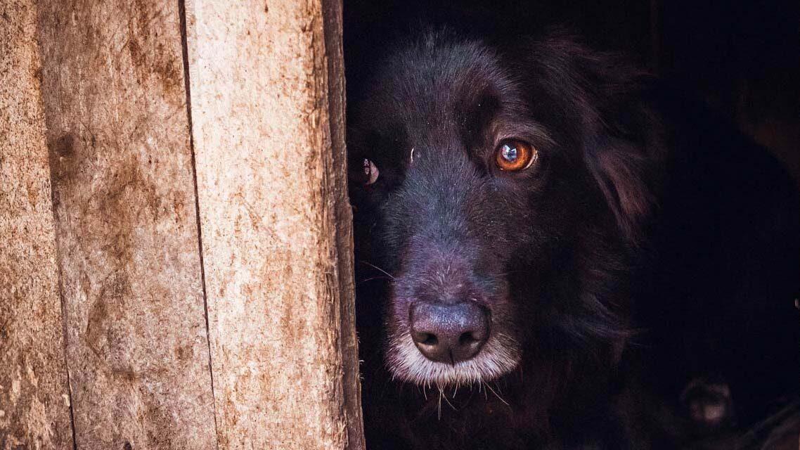 Vaskerítésbe szorult kutyát mentettek a gödöllői tűzoltók – videó