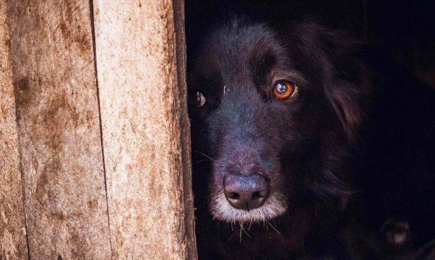 14 kutyát tartott egy Zala megyei családi házban egy nő