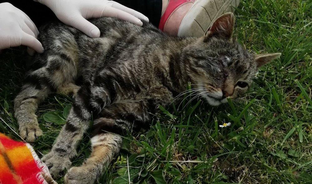 Megkínozták a macskát, majd öt golyót eresztettek a fejébe