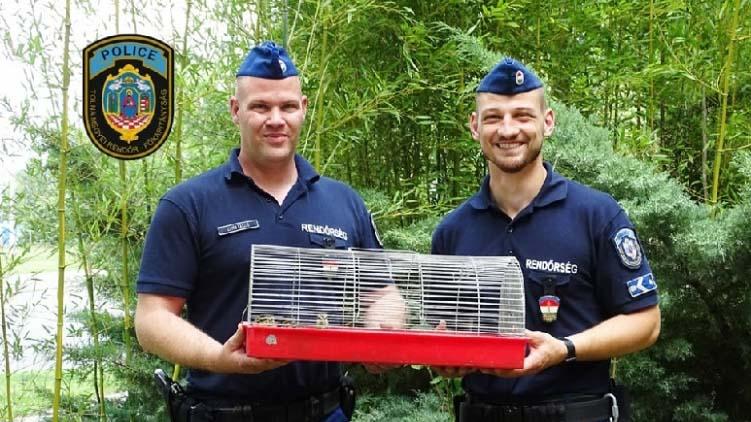 Riasztották a rendőröket – bajban volt egy kacsacsalád