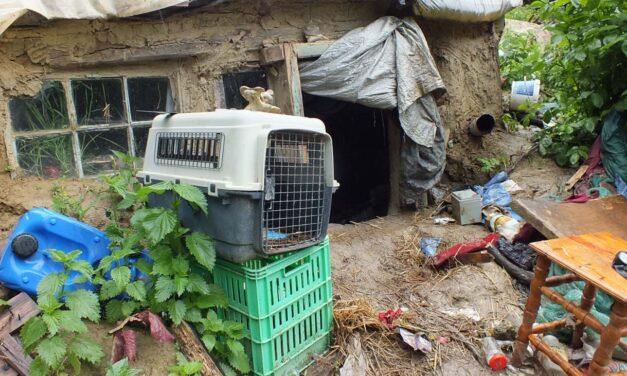 Ismét letartóztatták a kaposvári remetét, aki megégette a párját