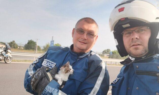 Nem mindennapi történet: autópályára tévedt kiscicát mentettek meg a monori rendőrök – fotók