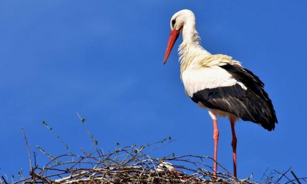 Borzalmas tragédia: villanyvezetéknek csapódott egy gólya majd kigyulladt
