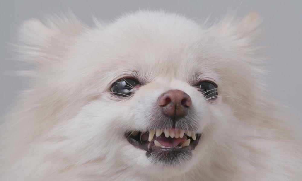 Brutális kutyatámadás Balatonszemesen: egy családot támadott meg a vérengző eb