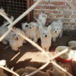 Horror Karcagon: Több száz kutya kínzásával vádolnak egy helyi férfit – videó a helyszínről