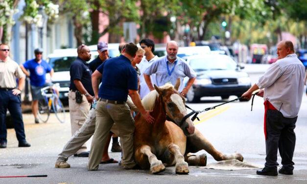 Elszabadult lovak okoztak felfordulást Keszthelyen, a megbokrosodott állatok egy autót is összetörtek