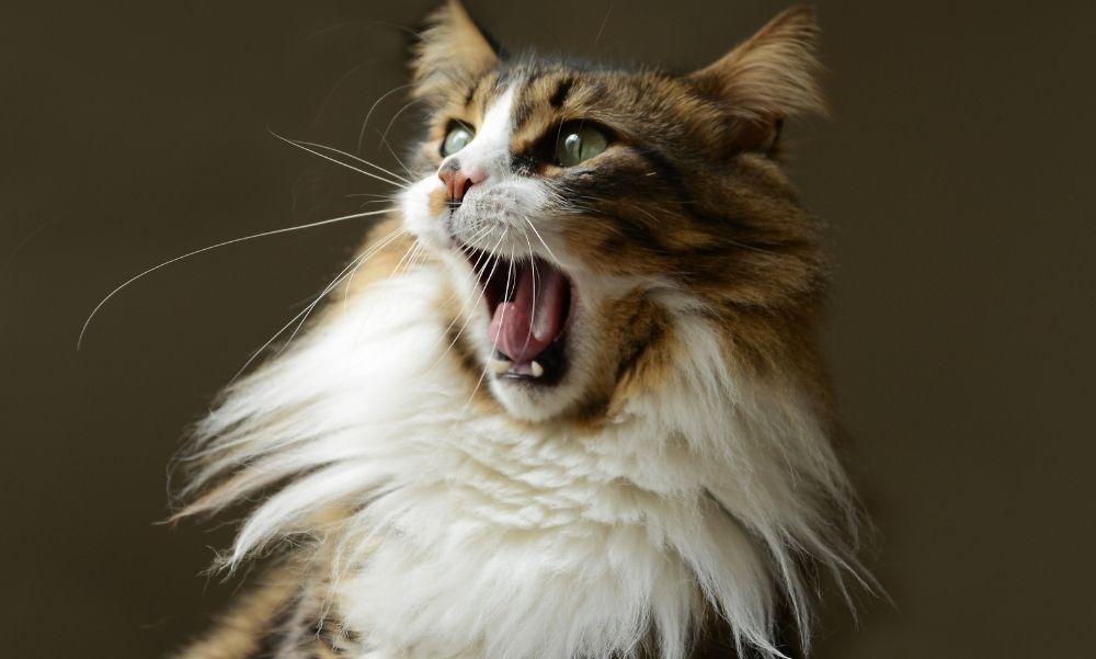 Rátámadt a gazdájára egy macska, a nő súlyosan megsérült