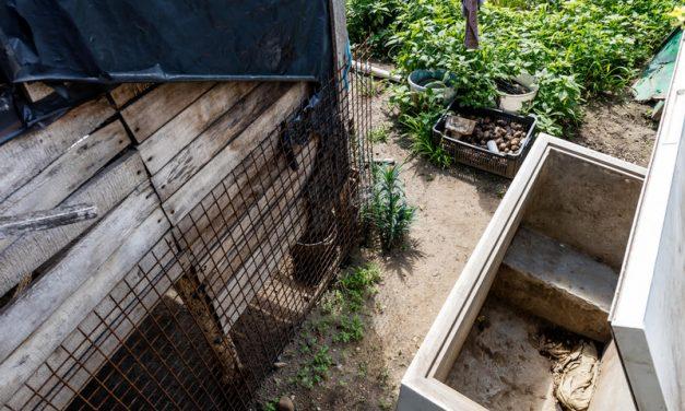 Szörnyű körülmények között tartott állatokat egy fiatal pár, 166 kutya életét mentették meg a hatóságok