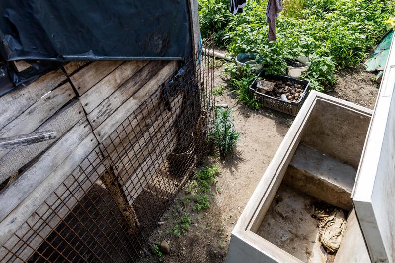 Láncra vert kutyák, elhullott állatok – Áldatlan, megdöbbentő állapotok uralkodnak egy tiszaeszlári állattartó telepen – Állatkínzás miatt felelhet a tulajdonos