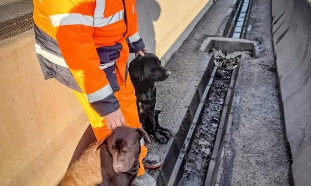 Autópályára tévedt kutyákat mentettek a Magyar Közút munkatársai – Gazdájuk egész nap kereste őket