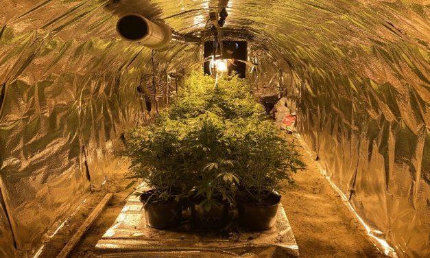 Borospincében termesztettek füvet: a rendőrök felszámolták az illegális ültetvényt – videó
