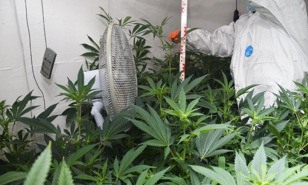 Budapesti testvérpár termesztett marihuánát: a férfiak milliókkal buktak le – videó