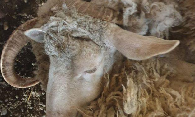 Döbbenetes körülmények között tartották ezeket az állatokat Pest megyében – Sokkoló fotók