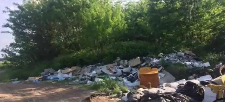 Kóbor kutyák miatt hívták az állatvédőket a Pest megyében – A helyszínre érve sokkot kaptak, egy illegális dögtelepre bukkantak – videó