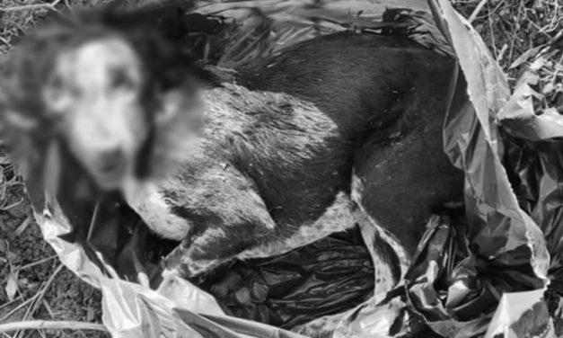 Felkavaró: szemeteszsákban dobtak ki két kölyökkutyát Tatabányán – Az állatok küzdöttek, de nem tudtak kiszabadulni, mindketten elpusztultak – videó