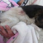 Nyakon lőtte a két hónapos foxi kutyát, a rendőrök elfogták a tiszapüspöki férfit