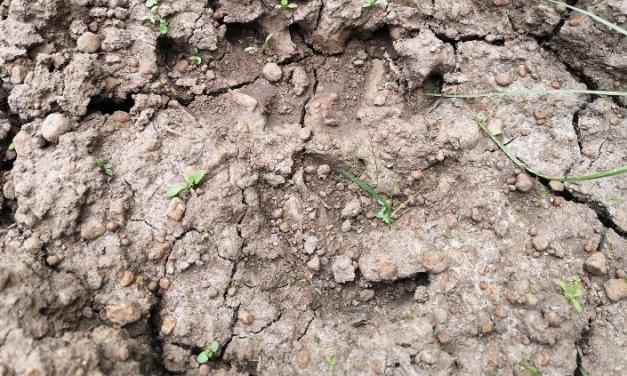 Medvenyomokra bukkant egy blogger a Balaton környékén – Hivatalosan cáfolják, hogy ilyen állat élne a Bakonyban
