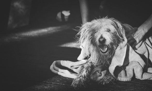 Láncra verve, borzalmas módon tartotta a kutyáit egy férfi Domaházán – Az állatok víz és élelem nélkül voltak, volt amelyik már el is pusztult