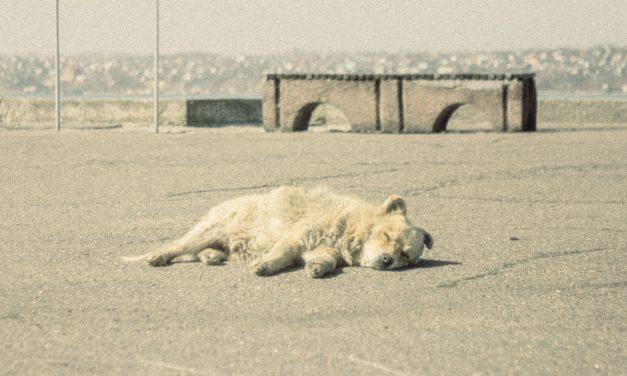 Borzalom Zala megyében: nyakon lőtt egy kutyát a 67 éves férfi, majd a sorsára hagyta